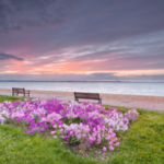 pink flowers and benches set on the shores of the Isle of Wight